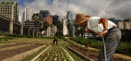urban_agriculture_530